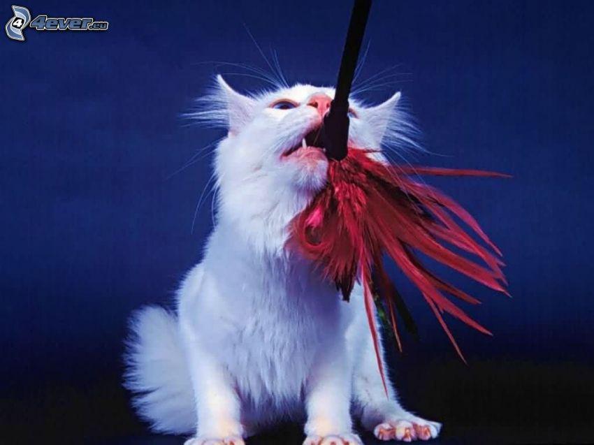 biały kot, zabawka