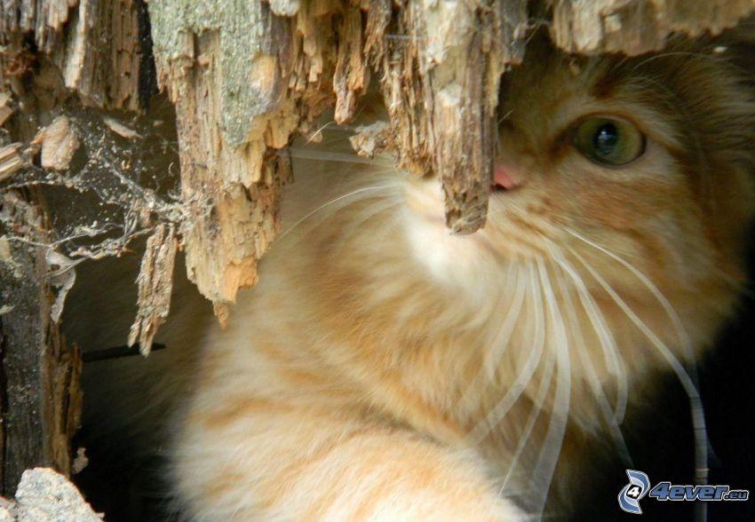 brązowy kot, drewno