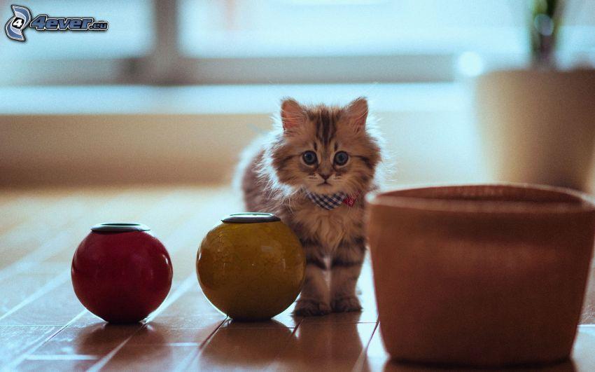 brązowy kotek, doniczka, kule