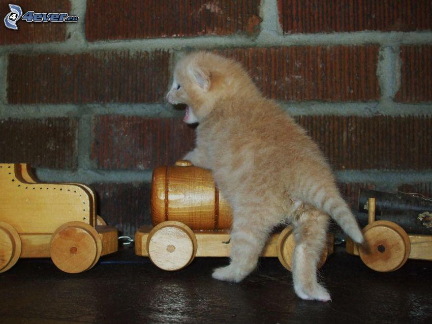 brązowy kotek, drewniany pociąg