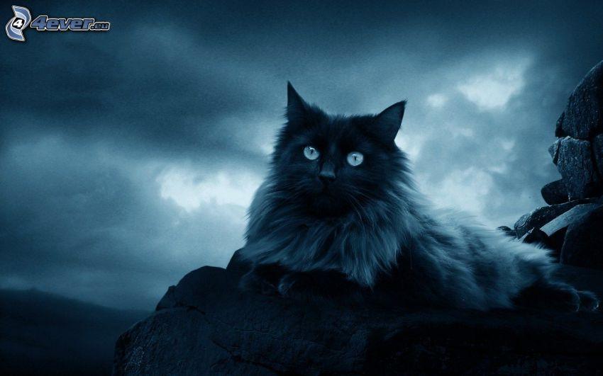 czarny kot, ciemne niebo