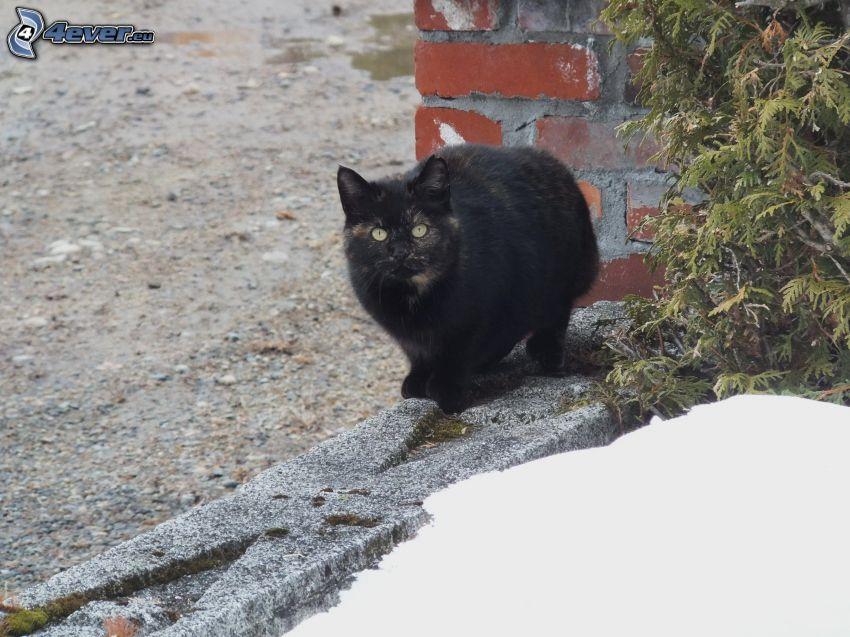 czarny kot, murek, śnieg