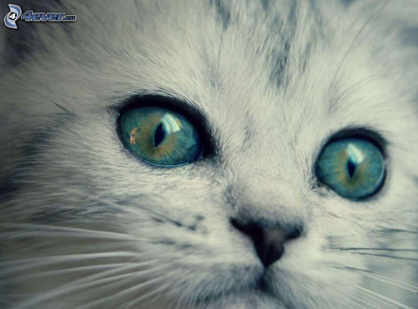 kocie oczy, kotek