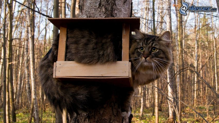 kot, budka dla ptaków, las