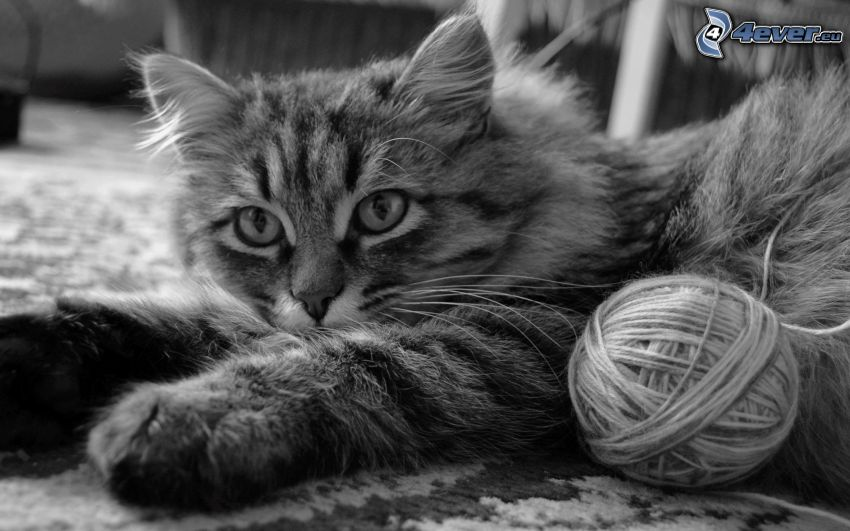 kotek, kłębek