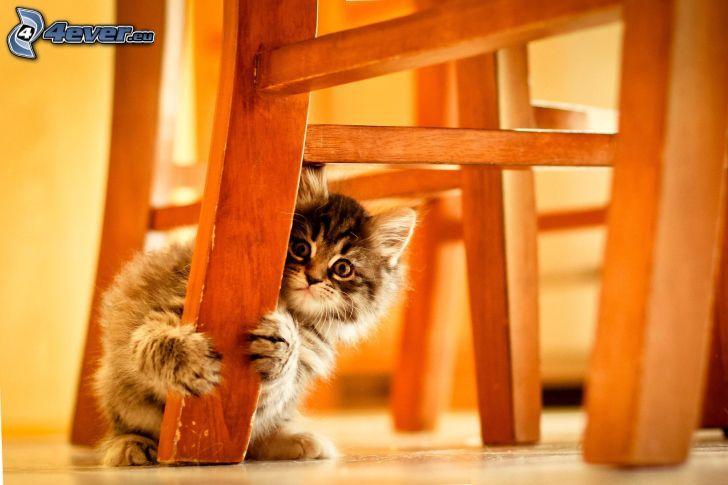 kotek, krzesło, strach