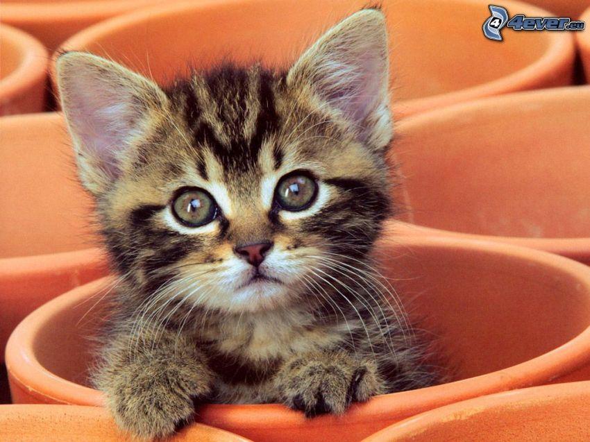 kotek, kubki, spojrzenie kota