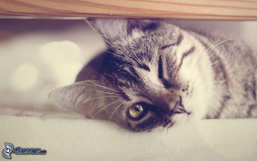 kotek, mrugnięcie