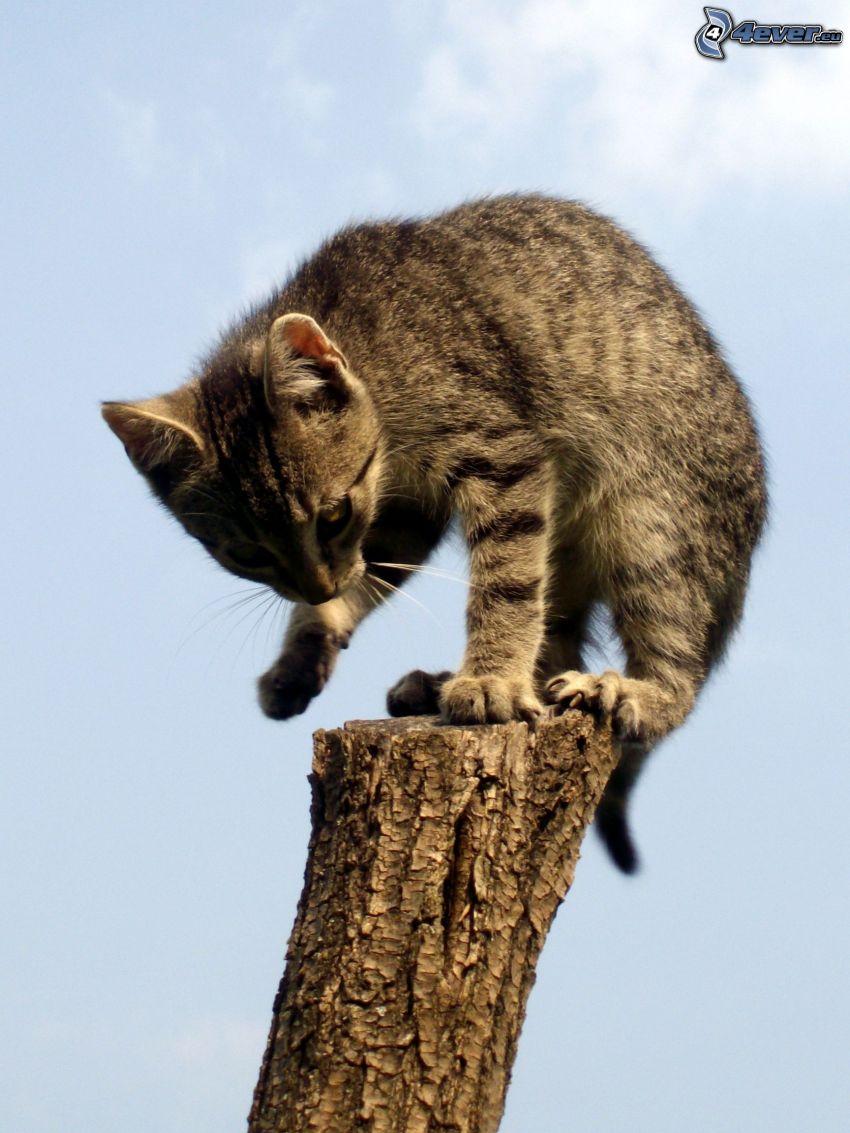 kotek na słupie, niebo, drewno