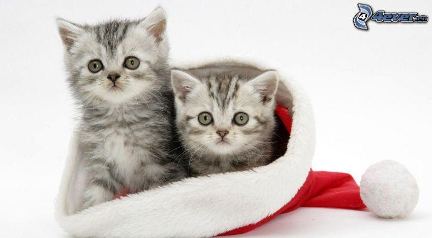 kotki, czapka Świętego Mikołaja