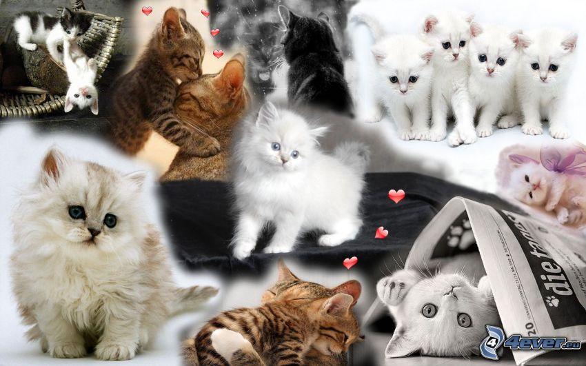 kotki, kolaż