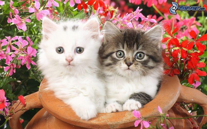 kotki, spojrzenie, kwiaty