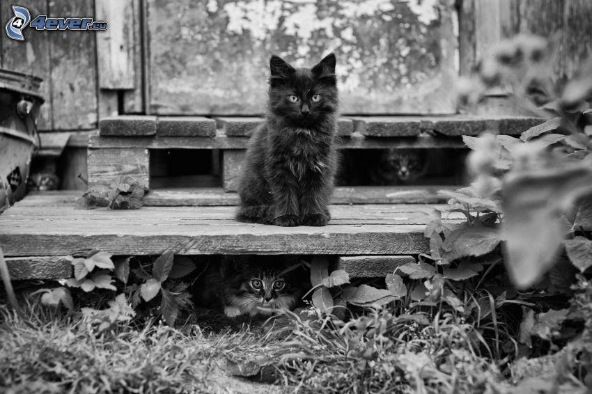 kotki, trawa, czarno-białe