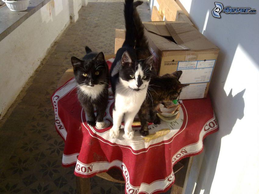 koty, stół, balkon