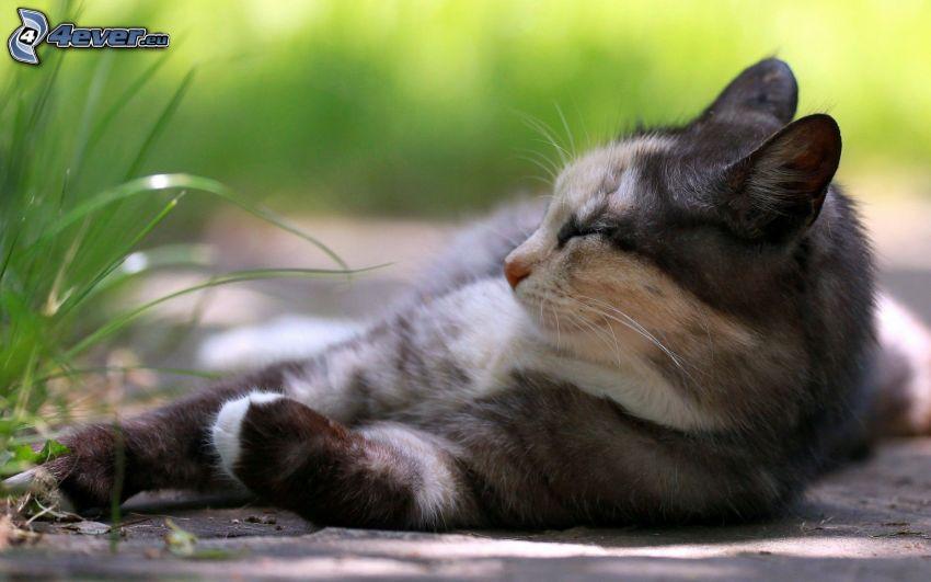 leniwy kot, odpoczynek