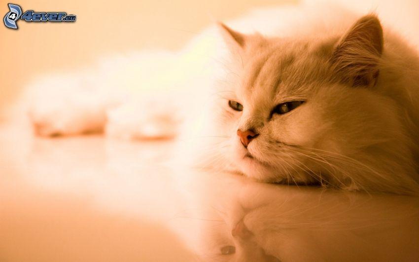 leniwy kot, podłoga