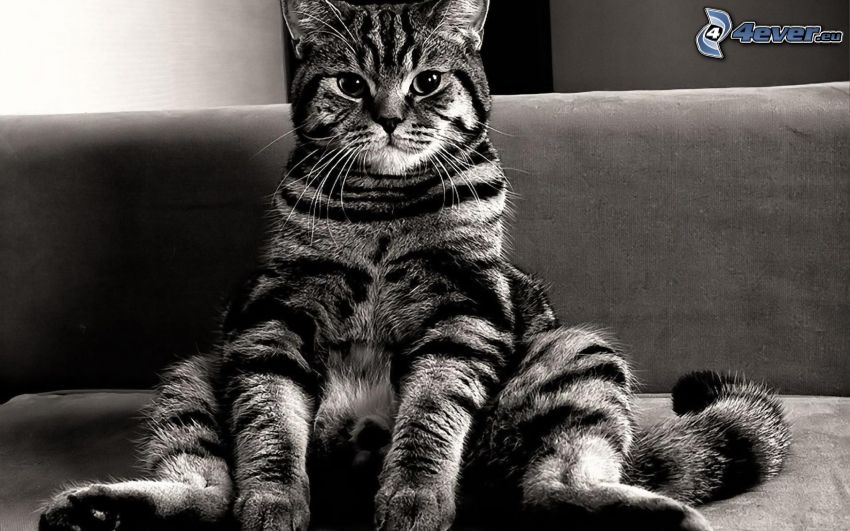leniwy kot, sofa