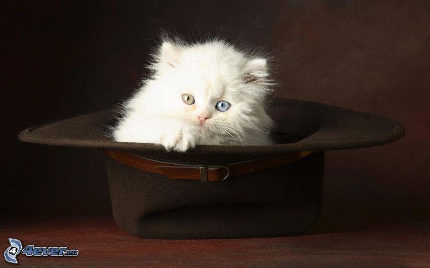 Mały biały kotek, kapelusz