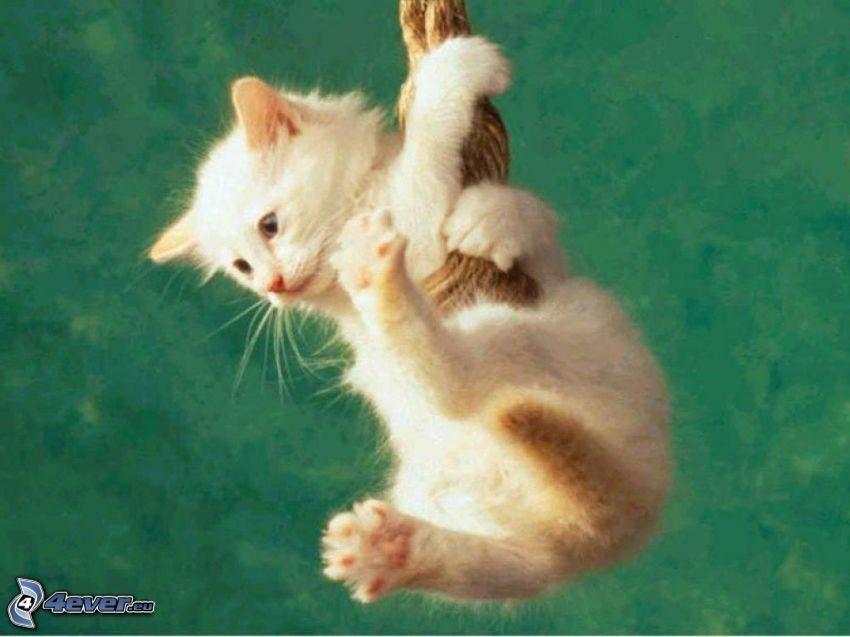 Mały biały kotek, lina