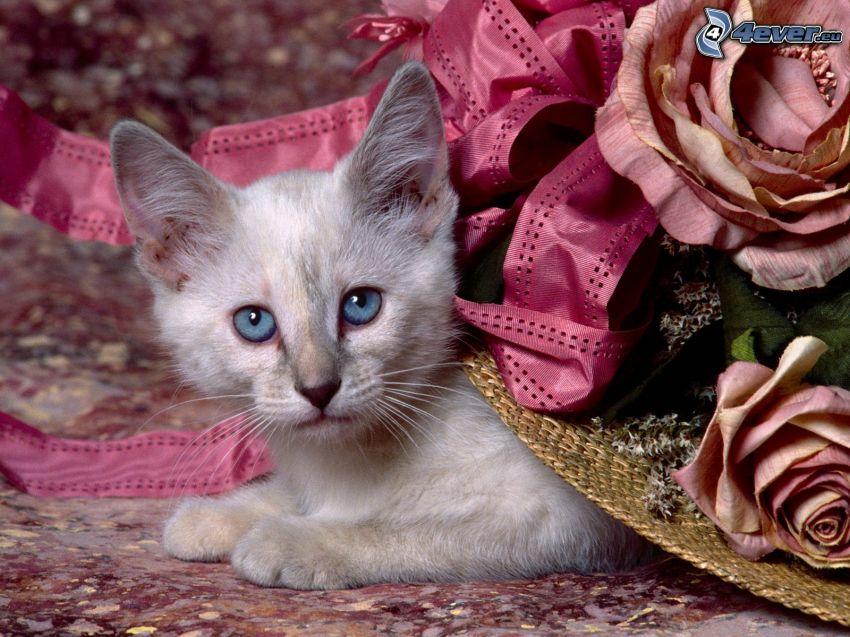 Mały biały kotek, niebieskie oczy, róże