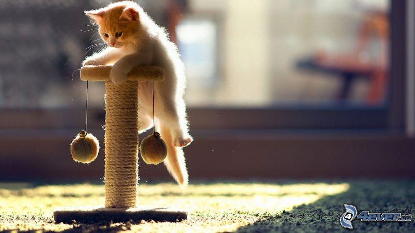 Mały biały kotek, zabawka
