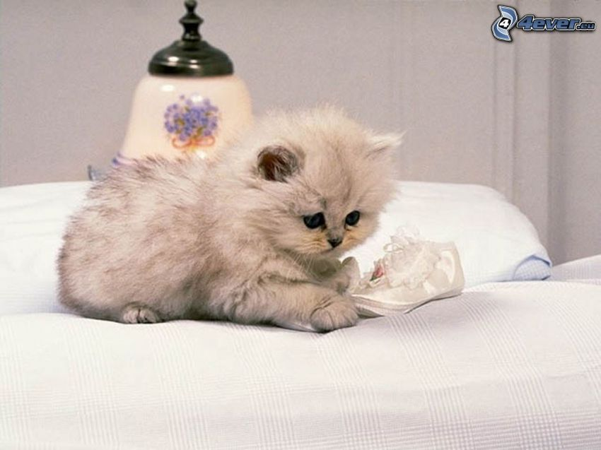 Mały biały kotek