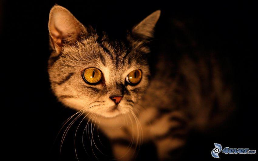 mały kotek, ciemność