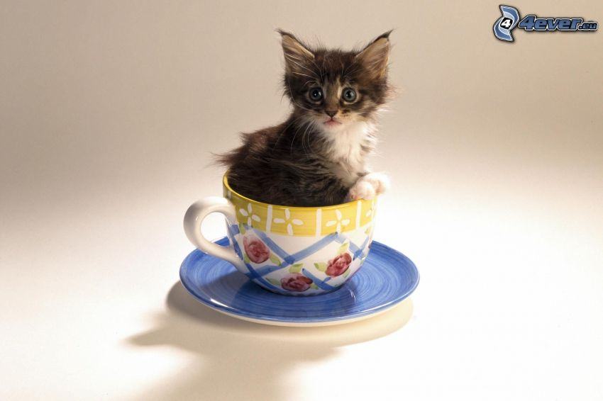 mały kotek, filiżanka