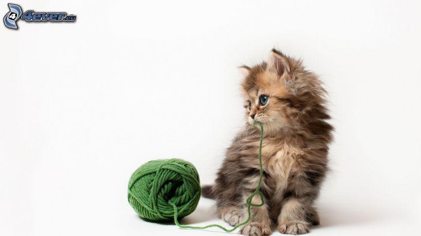 mały kotek, kłębek