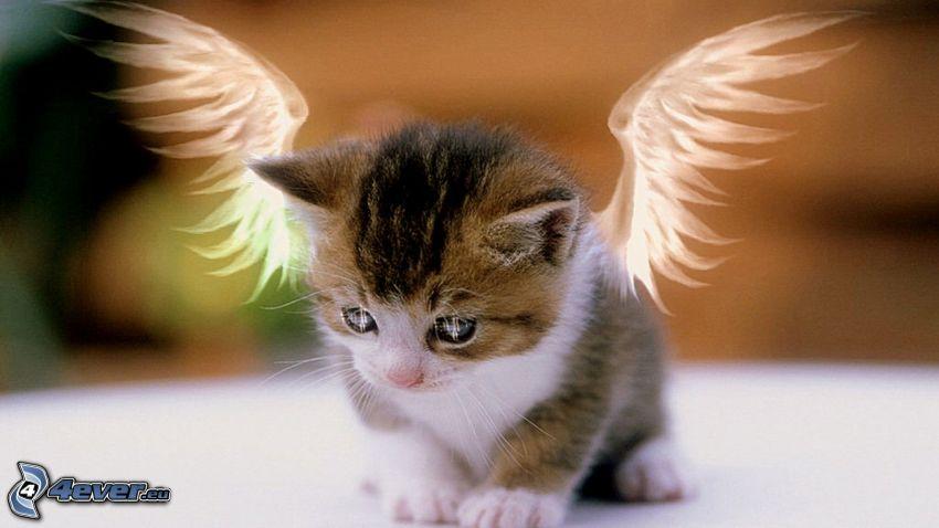 mały kotek, rysunkowe skrzydła