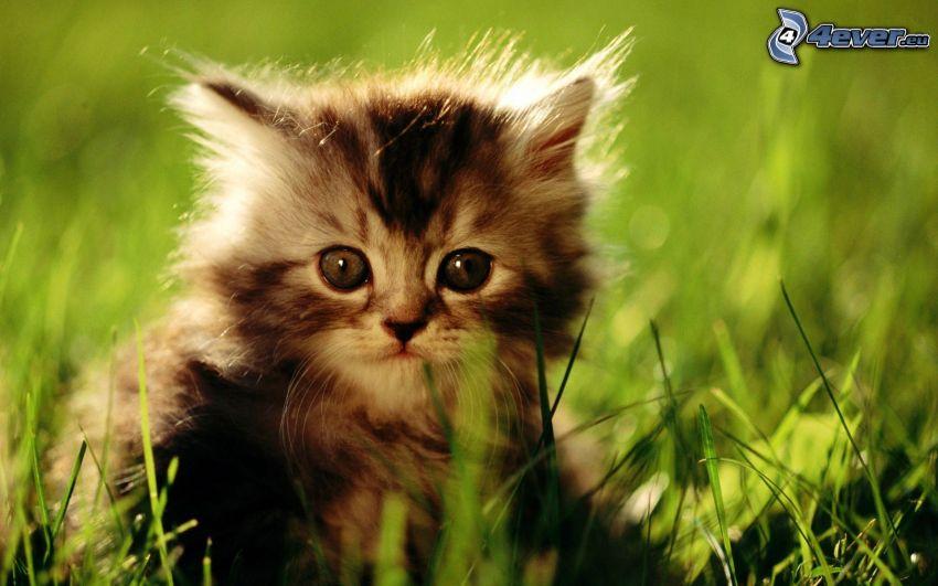 mały kotek, trawa