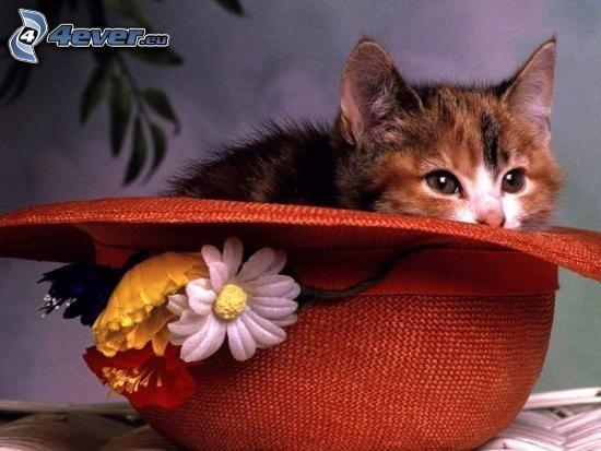pstrokaty kociak, kapelusz, kwiatek