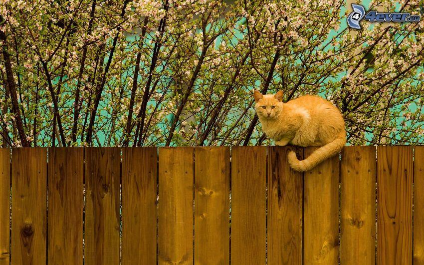 rudy kot, kot na płocie, drewniany płot, rozkwitnięte drzewo