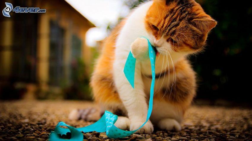 rudy kotek, wstążka
