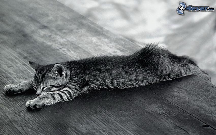 śpiący kot, stół, drewno, czarno-białe