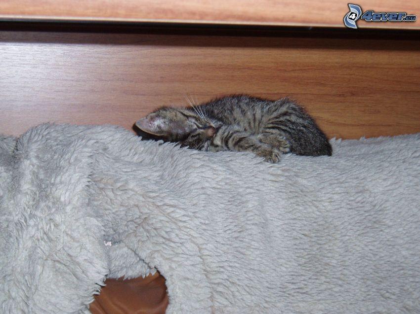 Śpiący kotek, futro