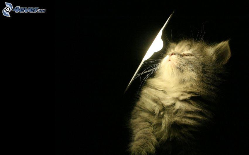 włochaty kotek, lampa
