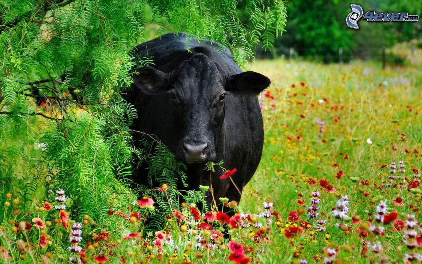 krowa, łąka, kwiaty