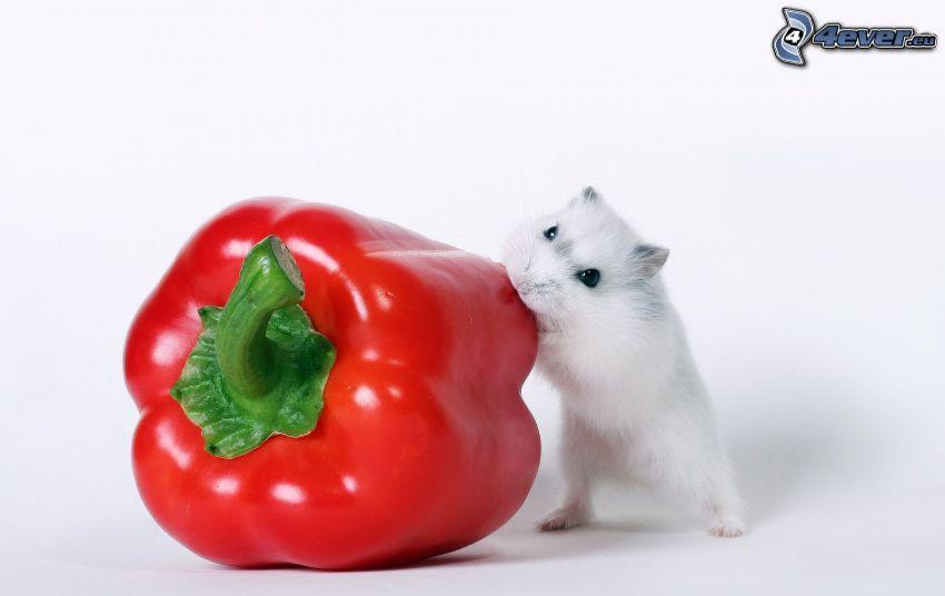 mysz, czerwona papryka