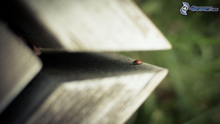 biedronka, drewno
