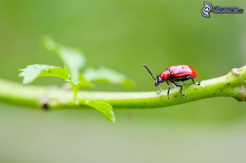 chrząszcz, konar