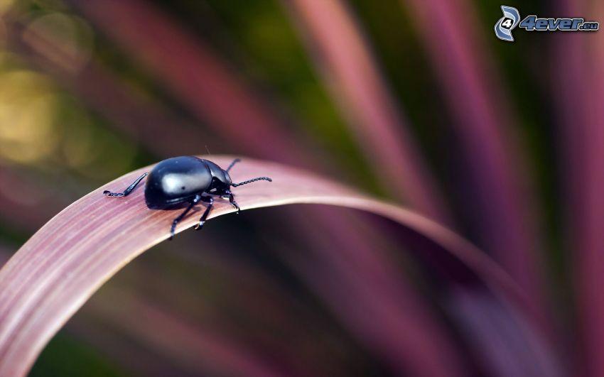 chrząszcz, liść