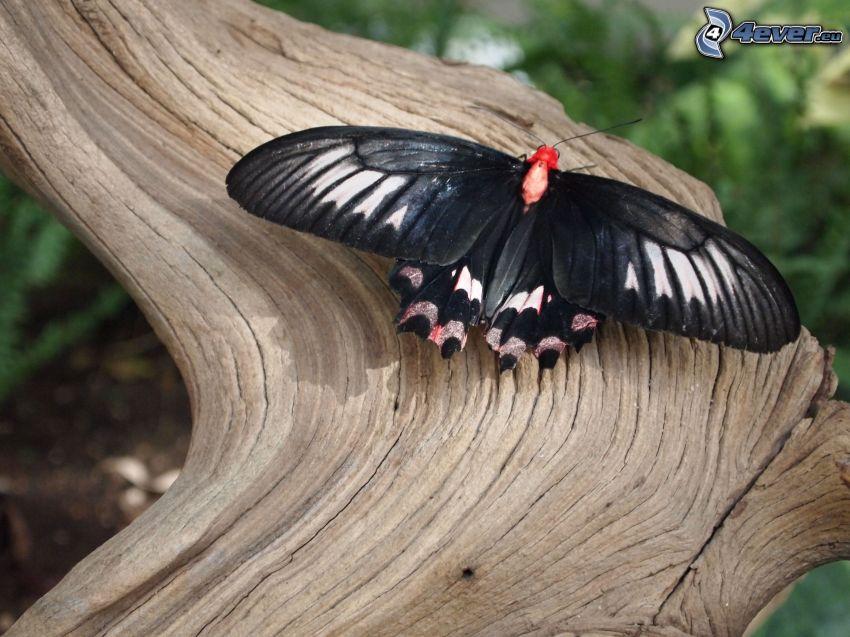 czarny motyl, drewno