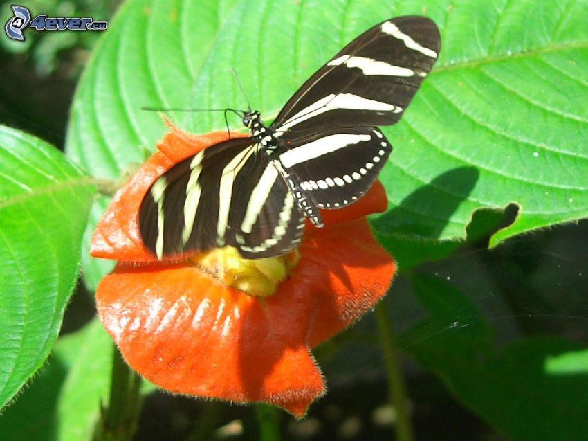 czarny motyl, pomarańczowy kwiat