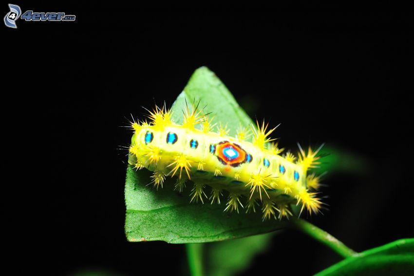 gąsienica, zielony liść