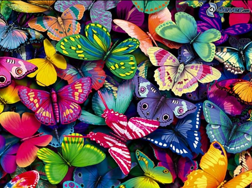 kolorowe motyle