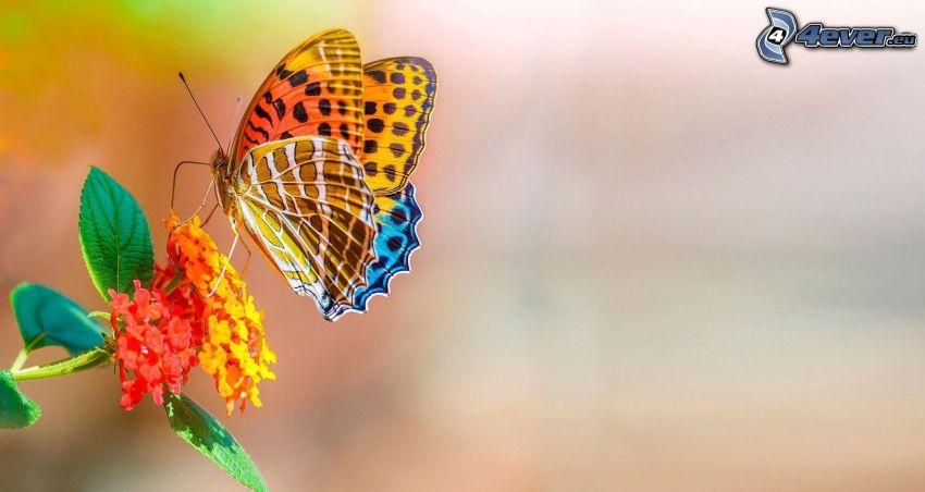 kolorowy motyl, kwiat