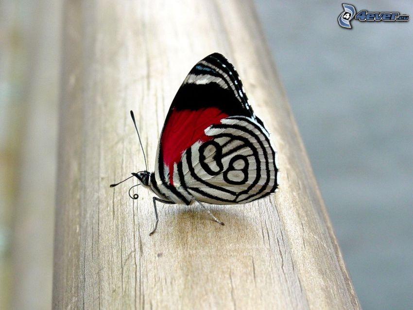 motyl, drewno