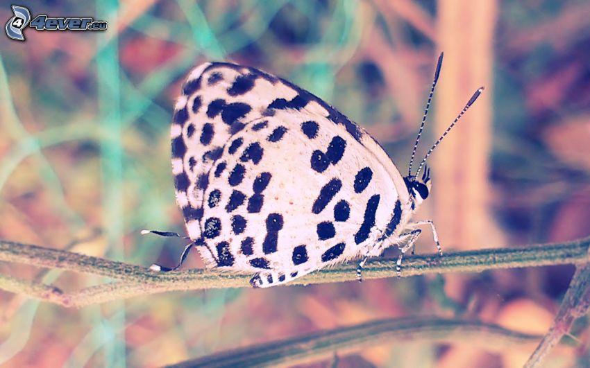 motyl, gałązka