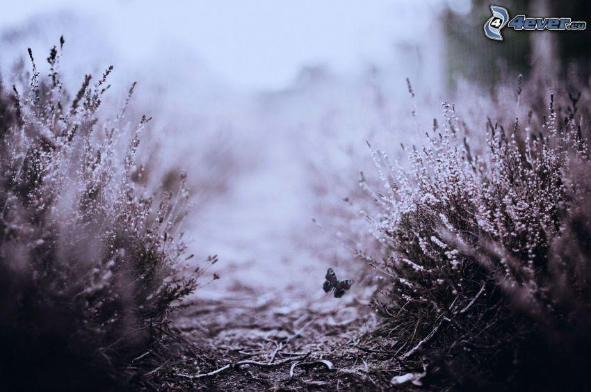 motyl, kwiaty, czarno-białe zdjęcie